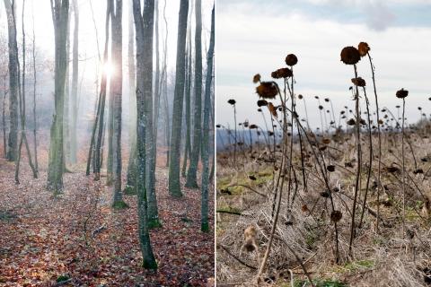 Landschaften [12/15]